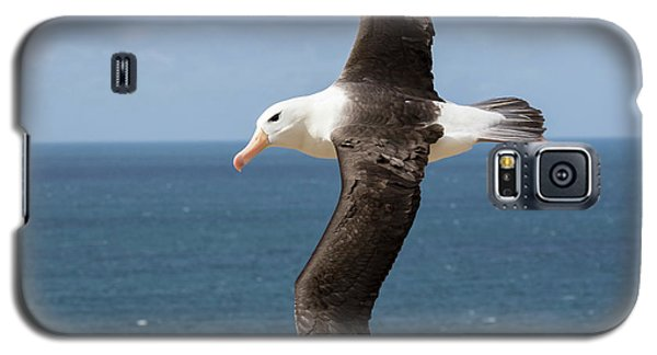 Black-browed Albatross (thalassarche Galaxy S5 Case by Martin Zwick