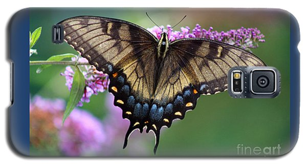 Eastern Tiger Swallowtail Butterfly On Butterfly Bush Galaxy S5 Case