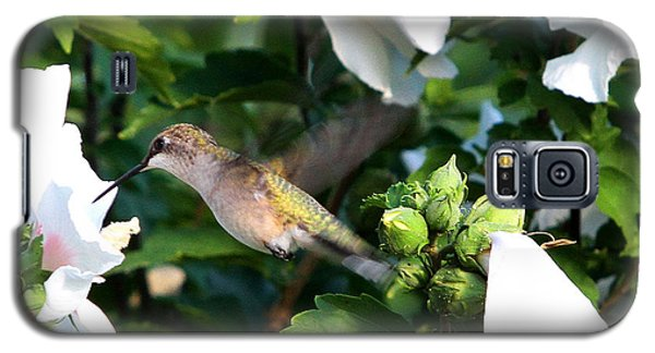 Galaxy S5 Case featuring the photograph Hummingbird by John Freidenberg