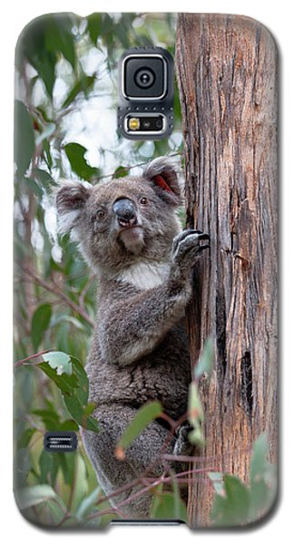 Koala (phascolarctos Cinereus Galaxy S5 Case