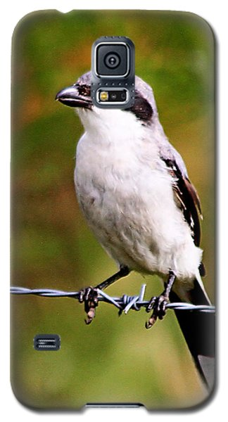 Loggerhead Shrike Galaxy S5 Case