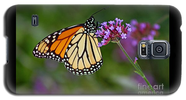 Monarch Butterfly In Garden Galaxy S5 Case