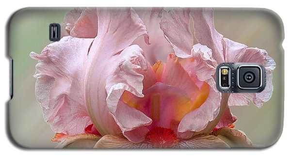 Pink Electrabrite Bearded Iris Galaxy S5 Case