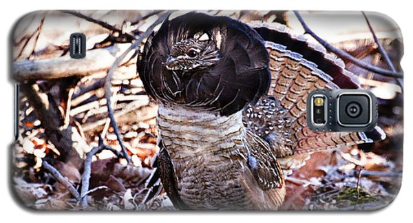 Ruffed Grouse Galaxy S5 Case