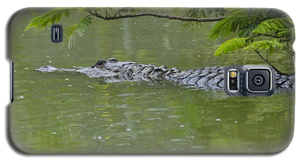 American Alligator Galaxy S5 Case by Mark Newman