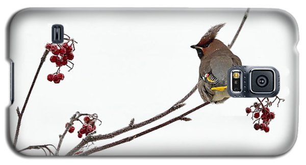 Bohemian Waxwings Eating Rowan Berries Galaxy S5 Case