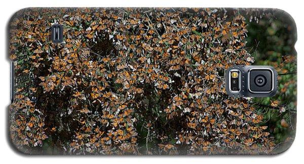Monarch Butterflies Galaxy S5 Case by Carol Ailles