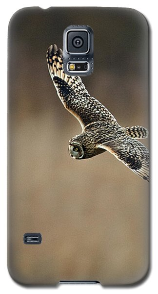 Galaxy S5 Case featuring the photograph Short Eared Owl  by Paul Scoullar