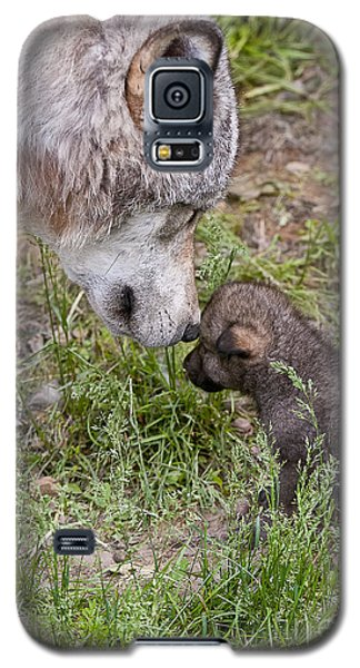 Timber Wolf Pictures Galaxy S5 Case