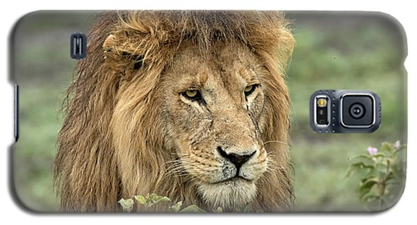 Lion Galaxy S5 Case - Africa, Tanzania, Serengeti by Charles Sleicher