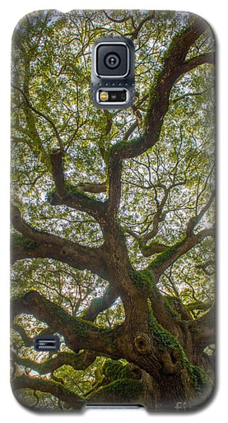 Island Angel Oak Tree Galaxy S5 Case