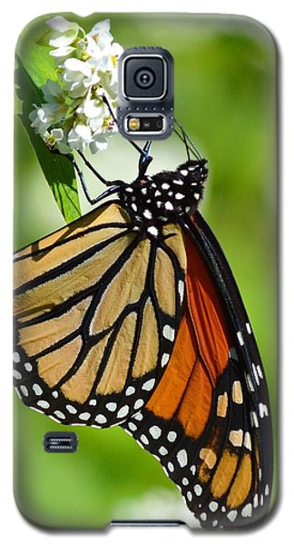 Butterfly Galaxy S5 Case by Dacia Doroff