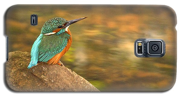 Galaxy S5 Case featuring the photograph Kingfisher by Paul Scoullar