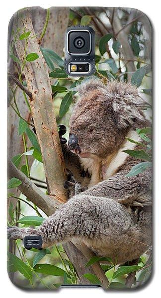 Koala (phascolarctos Cinereus Galaxy S5 Case by Martin Zwick