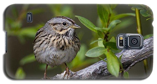 Lincolns Sparrow Galaxy S5 Case
