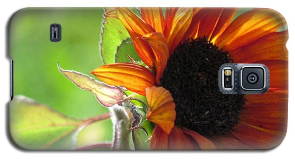 Sunflowers  Galaxy S5 Case by France Laliberte