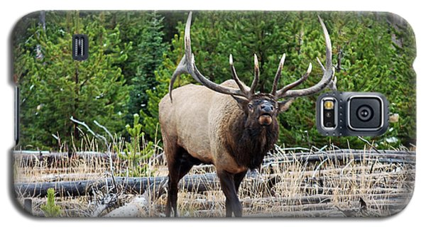 856p Bull Elk Galaxy S5 Case