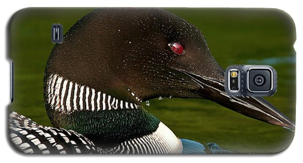 Common Loon Galaxy S5 Case
