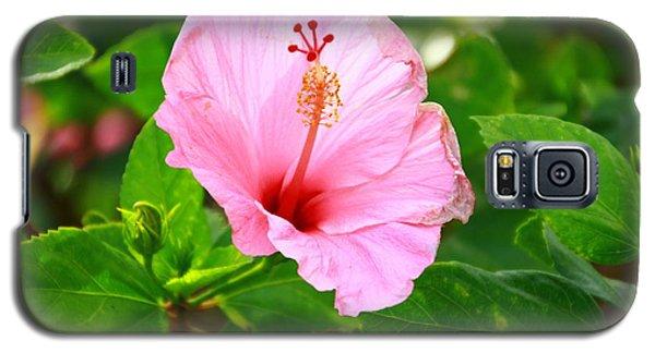 Flowers Galaxy S5 Case