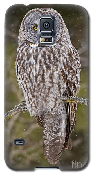 Great Gray Owl Galaxy S5 Case