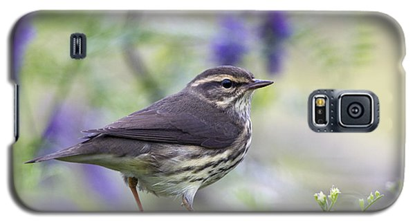 Northern Waterthrush Galaxy S5 Case