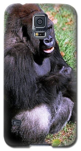 Silverback Western Lowland Gorilla Galaxy S5 Case