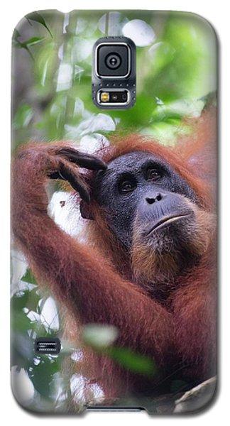 Sumatran Orangutan Galaxy S5 Case by Scubazoo