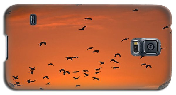 Birds At Sunset Galaxy S5 Case