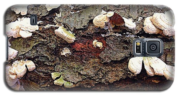 A Bark Story  Galaxy S5 Case