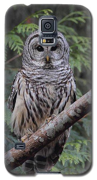 A Barred Owl Galaxy S5 Case
