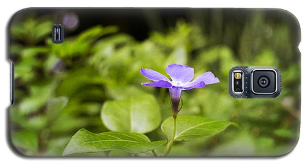 Galaxy S5 Case featuring the photograph A Bit Of Purple by Maria Janicki
