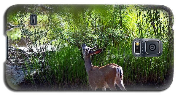 Galaxy S5 Case featuring the photograph A Buck Feeding by Brian Williamson