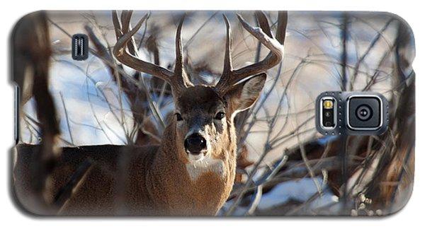 A Buck In The Bush Galaxy S5 Case