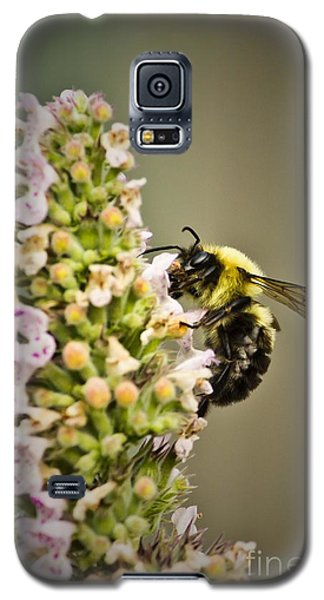 A Bumble Bee Working Galaxy S5 Case