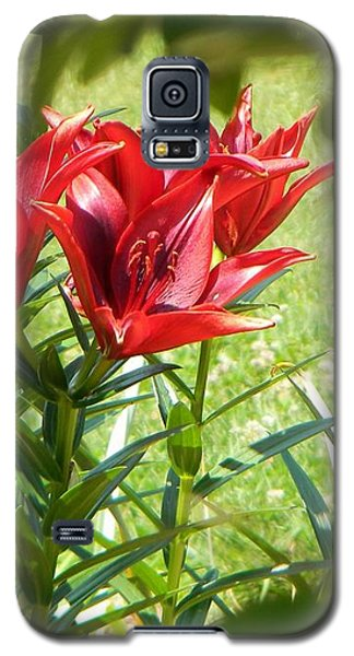 Galaxy S5 Case featuring the photograph A Burst Of Red by Jean Goodwin Brooks