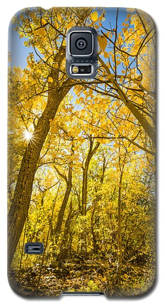 A Canopy Of Aspens At Mcgee Creek In The Eastern Sierras Galaxy S5 Case
