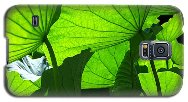 Galaxy S5 Case featuring the photograph A Canopy Of Lotus Leaves by Larry Knipfing
