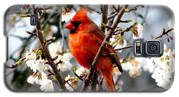 A Cardinal In The Apple Blossoms Galaxy S5 Case