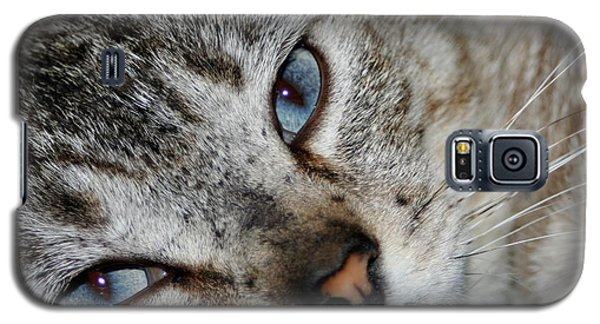 A Cat Named...blue Galaxy S5 Case by Barbara S Nickerson