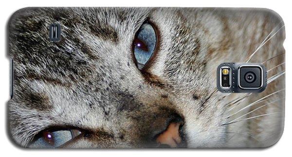 A Cat Named...blue Galaxy S5 Case