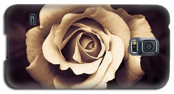 Galaxy S5 Case featuring the photograph A Chocolate Raspberry Rose by Wade Brooks