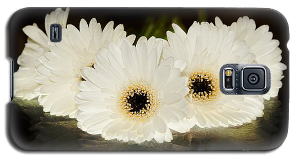 A Cluster Of White Gerber Daisies Galaxy S5 Case by MaryJane Armstrong
