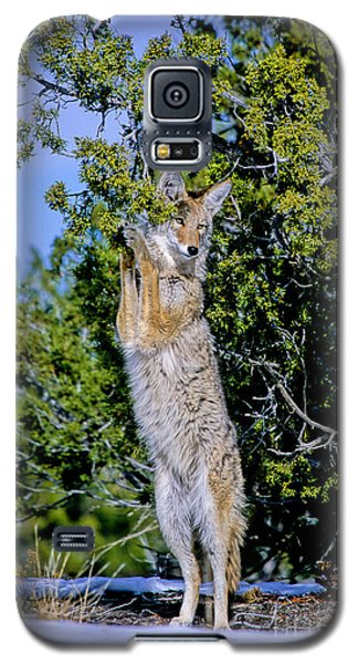 A Coyote Stands To Eat Galaxy S5 Case