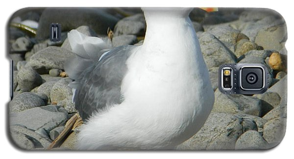 A Curious Seagull Galaxy S5 Case by Chalet Roome-Rigdon
