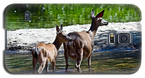 Galaxy S5 Case featuring the photograph A Doe And Fawn by Brian Williamson