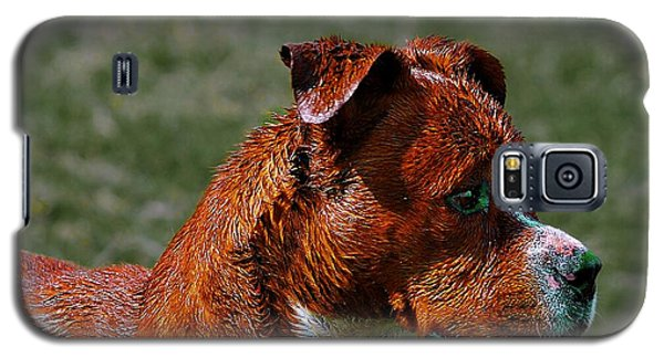 Galaxy S5 Case featuring the photograph A Dog by John  Kolenberg