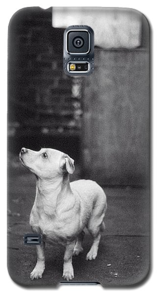 A Dog On The Roof In New York City Galaxy S5 Case