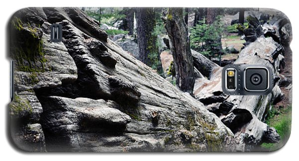 Galaxy S5 Case featuring the photograph A Fallen Giant Sequoia by Kyle Hanson