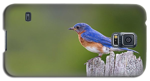 Galaxy S5 Case featuring the photograph A Favorite Perch by Gary Hall