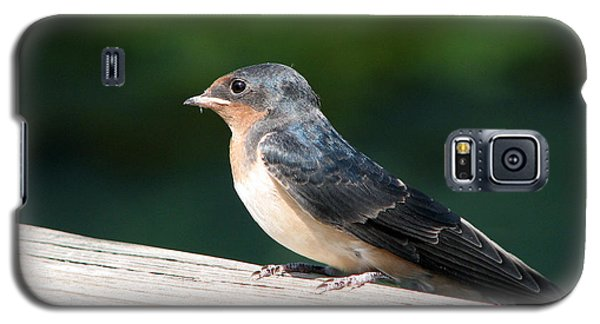 A Female Purple Martin Is Watching You Galaxy S5 Case